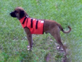 Leroy-Orange-vest2-280x180