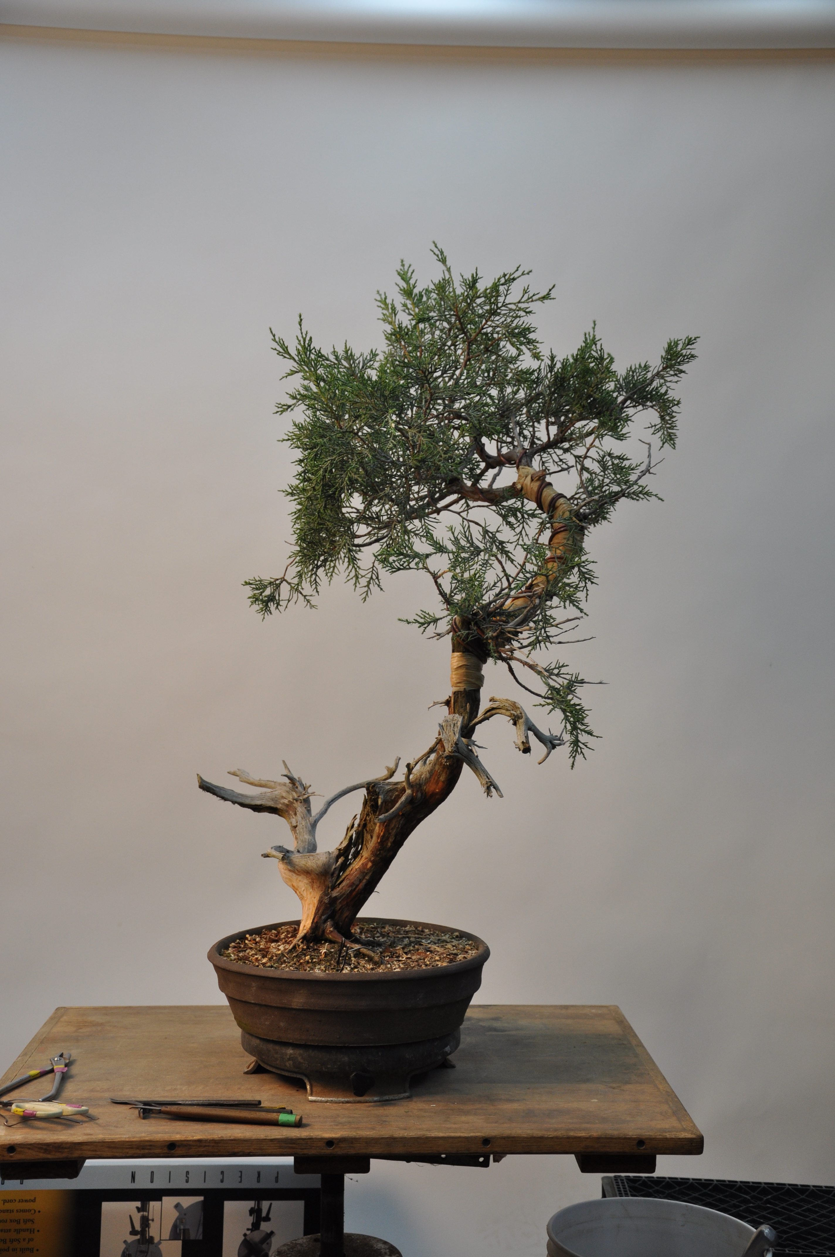 bonsai 5,6-09 011