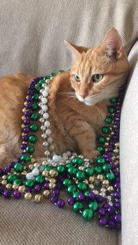 Puddles was a big fan of beads