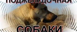 Поджелудочная железа собаки