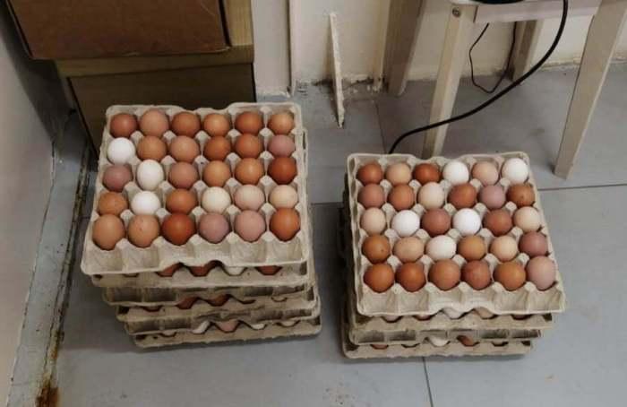 распознать уровень свежести яиц
