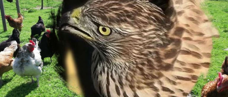 Сетка от хищных птиц