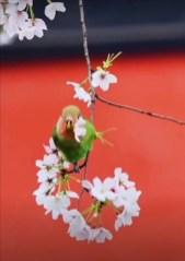 Птичка с цветочком
