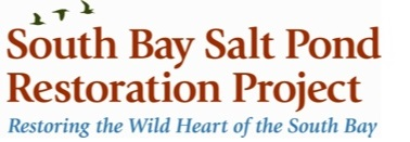 South Bay Salt Ponds Restoration Project's May 2013 Newsletter