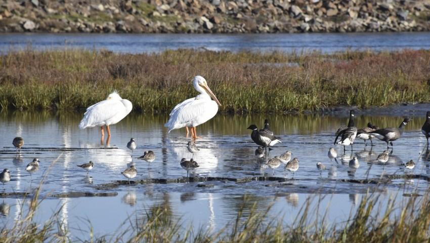 Agenda and Presentation Slides – Emerging Environmental Risks for the San Francisco Bay