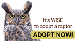 adopt a raptor button