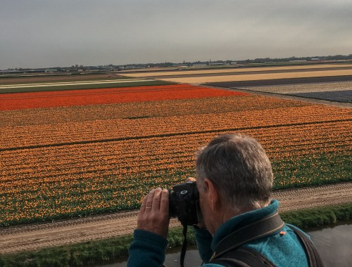 Tulip Fields at Keukenhof in The Netherlands