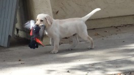 Bonnie pup