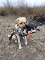 rhaya holds goose lieve