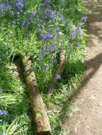 Bluebell Woods, Coughton Court, UK