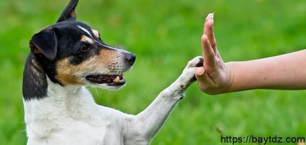 كيفية تدريب الكلاب