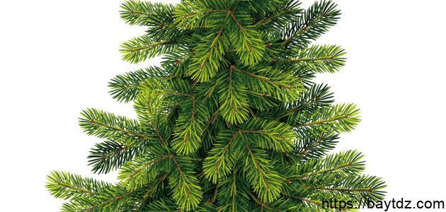 موضوع عن أسبوع الشجرة