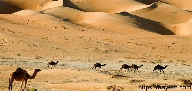 بحث عن البيئة الصحراوية