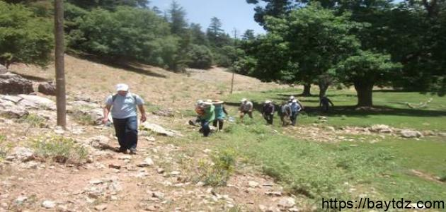 بحث عن التربية البيئية