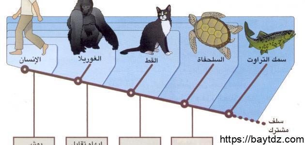 تنوع الكائنات الحية ومبادئ تصنيفها