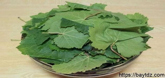 طريقة ورق العنب الطازج