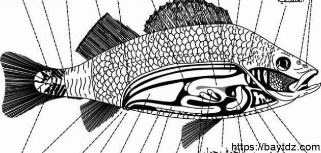 كيف تتنفس السمكة