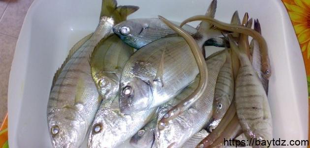 كيف تصطاد سمك