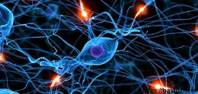 مكونات الخلية العصبية