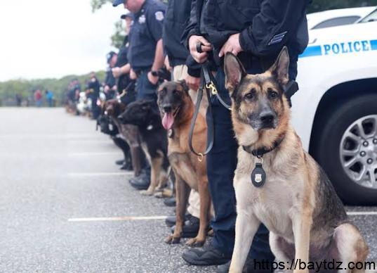 انواع الكلاب البوليسية بالصور