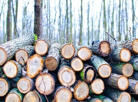 استيراد الخشب الموسكي من روسيا
