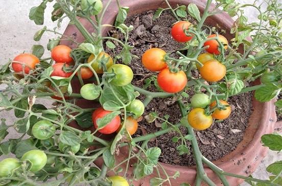 دراسة جدوى زراعة الاسطح وارباح 9500 جنية