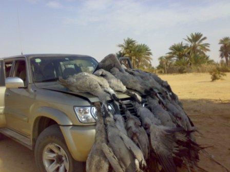مشروع مربح تنظيم رحلات الصيد في الصحراء وارباح ممتازة