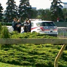 Exercise rider killed at Woodbine in collision of two horses – The