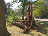 Storm Damage - Glen Road & Roxborough