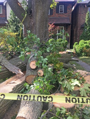 Storm Damage - Donegall Drive