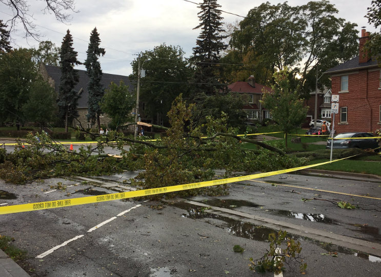 Heavy wind downs branches in Leaside but no one hurt