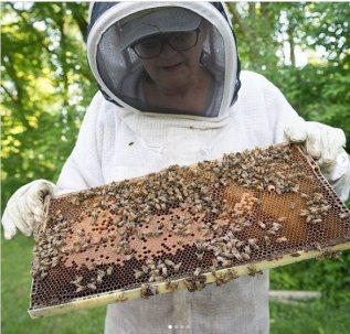 Bees at Sunnybrook