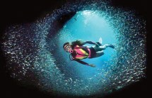 beat-the-heat---Scuba-Diving
