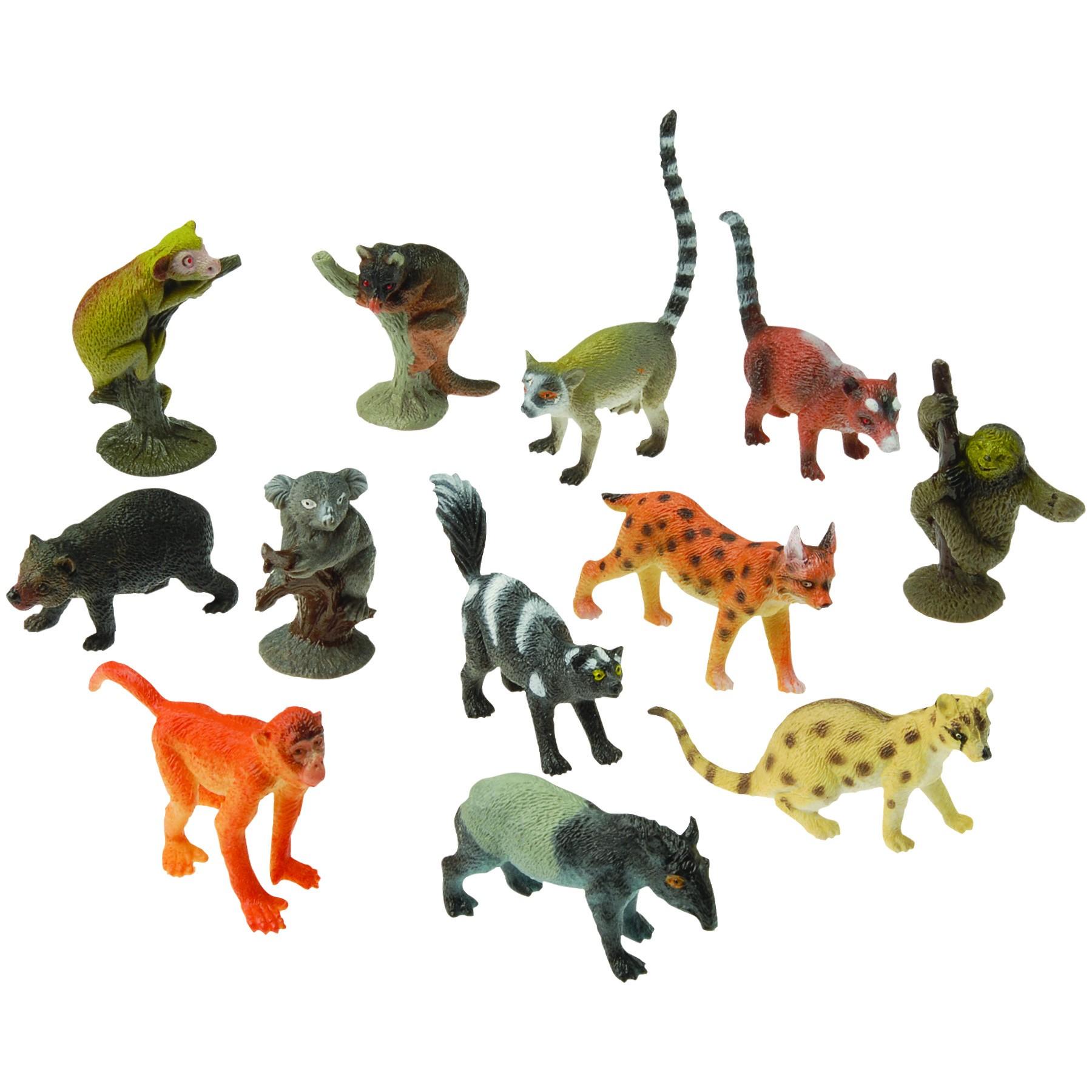Animals Rain Forest