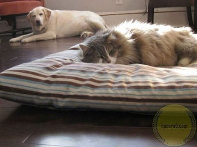 cats-dogs_bazara0-33-_wm