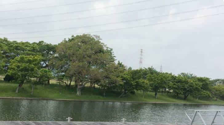 長良川 フィールド状況