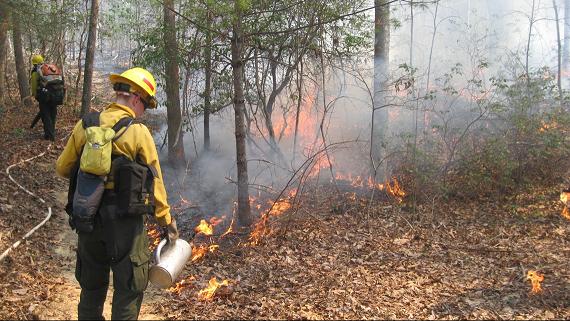 Park Plans Prescribed Burn in Cades Cove