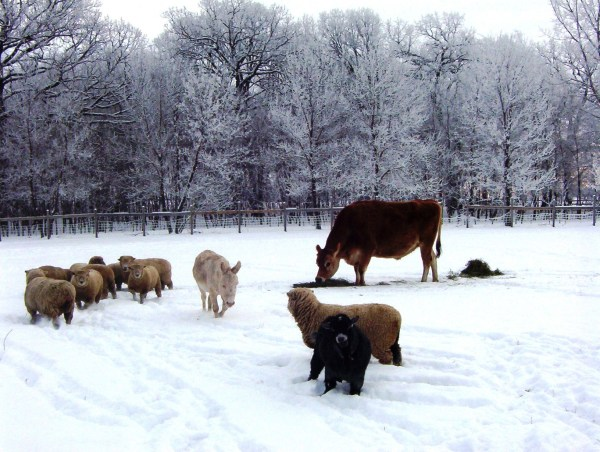 hobby-farm-animals01