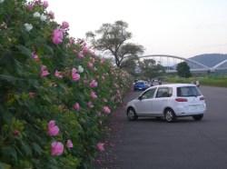 富士川緑地公園2