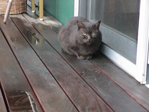 ネコ雨宿り