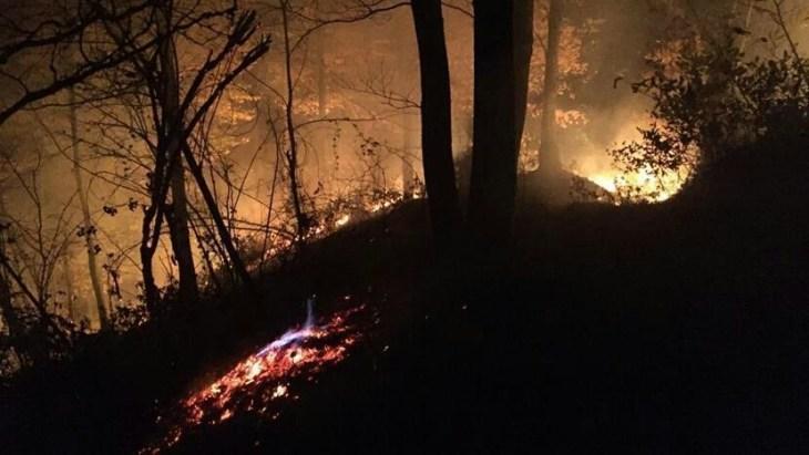 zjarri, dyoksidi karbonit