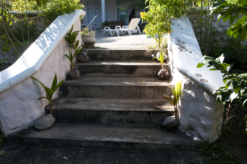 Coconuts growing on the steps to the villa pool area.