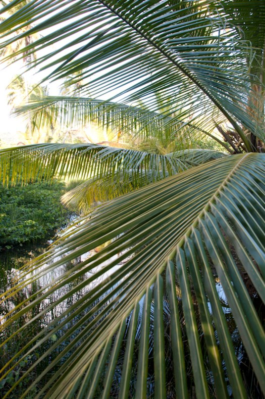Palms and a small creek along the path from the villa to the beach.