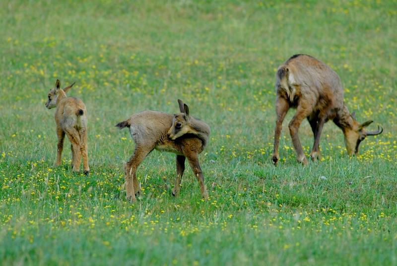 Toscana per bambini: lo zoo di Poppi