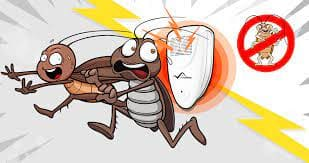 how to get rid of roaches in room