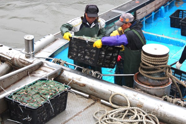 Unloading crabs in Incheon