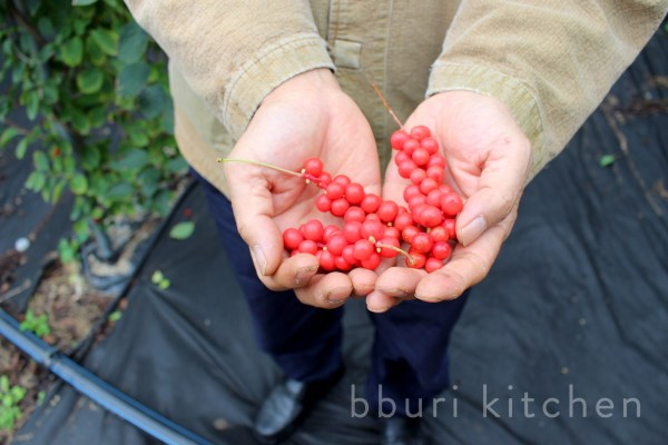 Kim Sang-su, banker-turned-omija farmer, shows us how to pick the ripest berries