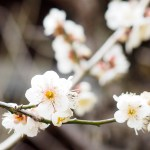 そしてようやくAD/HD一家に春の兆しが…