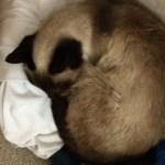 我が家の介護猫と定期検診