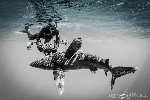 Oceanic Whitetip Shark & Underwater Photographer